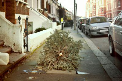 how to shop for a fresh christmas tree