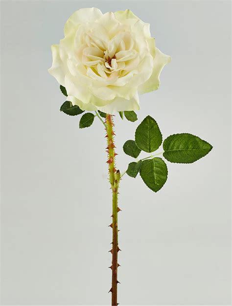 fiori di loto riccione rosa minerva fior di loto riccione