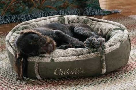 cabela s dog bed doggie bed cabela s com puppy pinterest