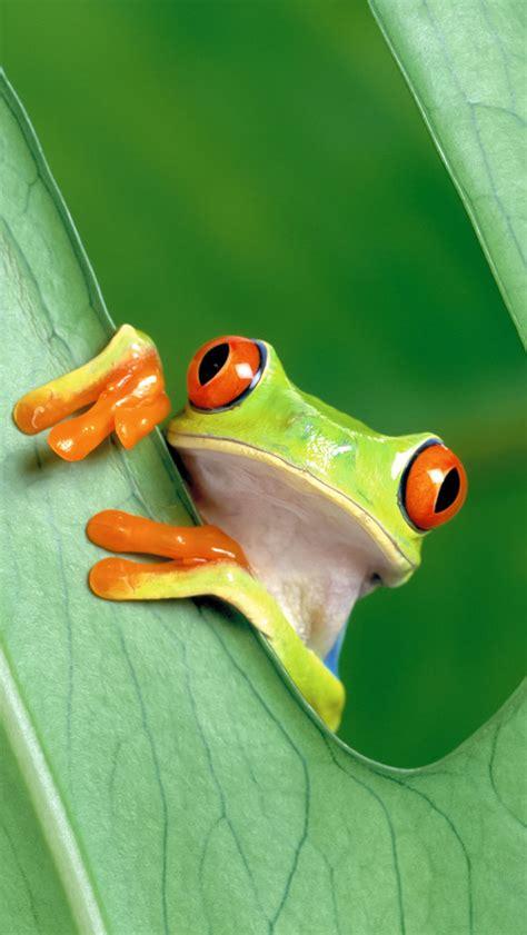wallpaper apple frog iphone 5c 5s wallpapers pack 1 hd retina dargadgetz