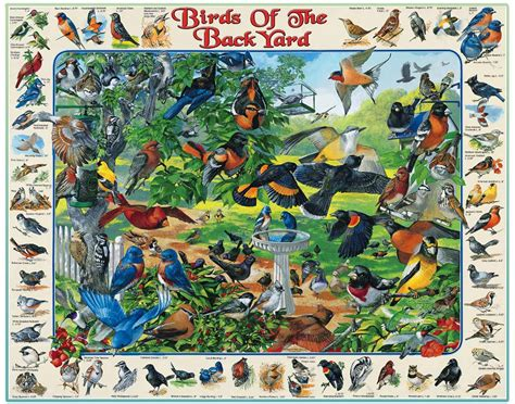 birds in backyard birds of the back yard puzzle white mountain puzzles white