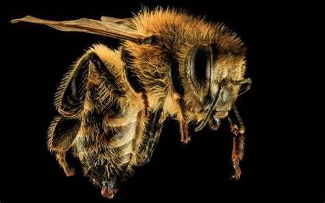 Bees Creepy Critters 53 best creepy critters images on