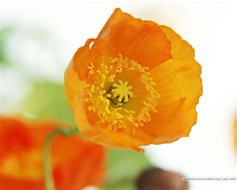 Pictures Of Flowers by