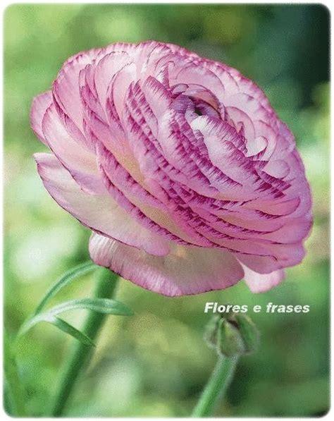 imagens de flores com frase 95 melhores imagens de flores e frases no pinterest