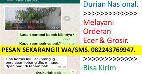 Bibit Durian Musang King Kaki 3 Kota Batam Kepulauan Riau wa sms 082243769947 jual bibit durian musang king bogor