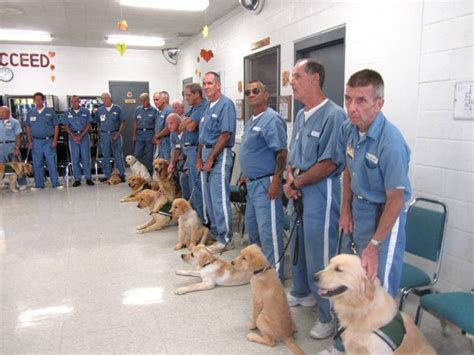 prison dogs maryland prisons launch program animal living