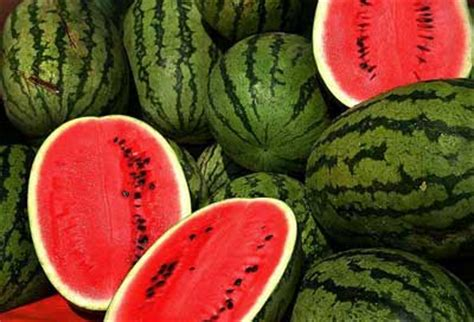 history of the watermelon history of watermelon
