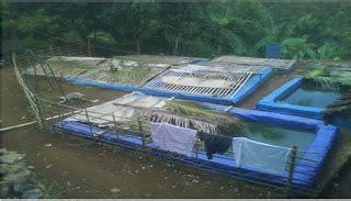 Pakan Ikan Lele Tanpa Pelet budidaya ikan lele tanpa pelet gabungan tradisional dan