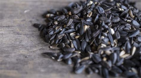 is black sunflower seeds for birds four seeds birds to eat p allen smith