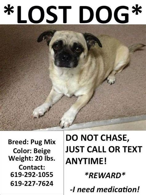 lost pug norfolk va lost still missing pug mix color beige weighing about twenty
