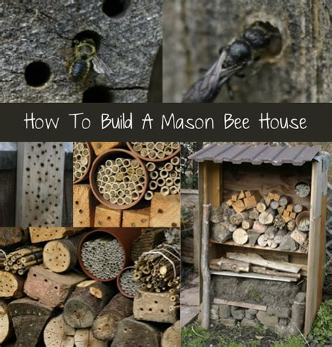 mason bee house how to build a mason bee house homestead survival