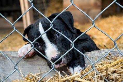 puppy mill facts 10 gruesome puppy mill facts wagbrag