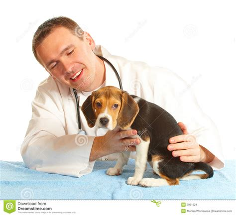 puppy doctor veterinarian doctor and a beagle puppy stock images image 7931624