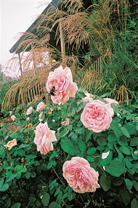 annuals  perennials  great companion plants