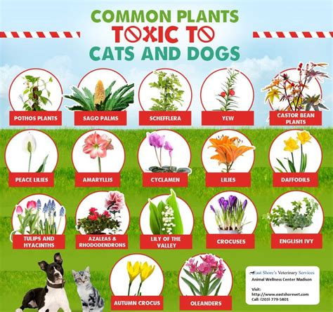 are for dogs plants that are toxic for your cats and dogs