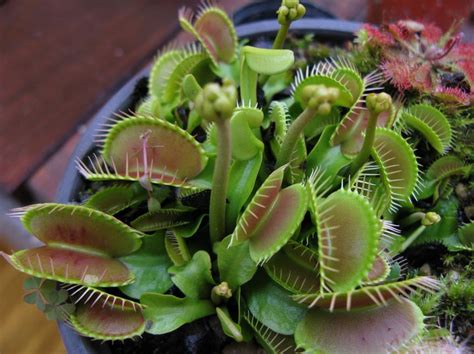 10 most amazing plants in the world