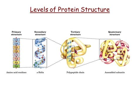 protein levels of structure levels of protein structure ppt