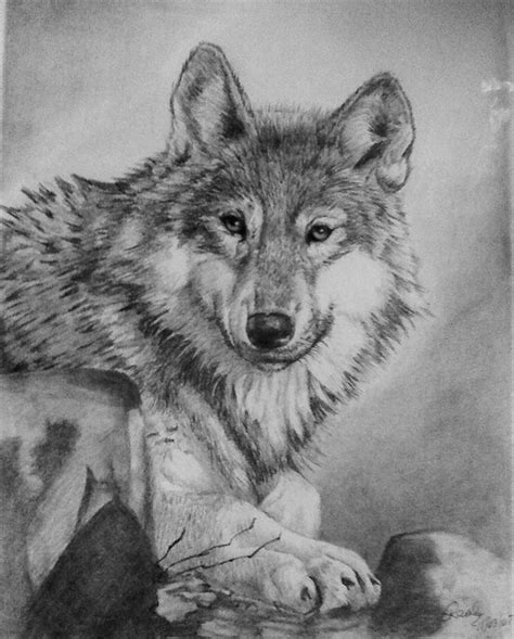 wolves drawings wolf drawing 5 days do you like it by xxxboastancoxxx