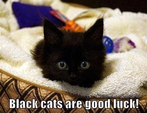 Good Luck Cat Meme - good luck cat meme www pixshark com images galleries