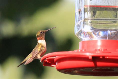 How To Keep Blackbirds Away From Bird Feeders how to keep birds away from hummingbird feeders