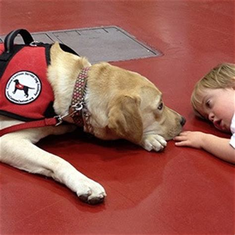 autism therapy dogs 10 different types of service dogs kickassfacts