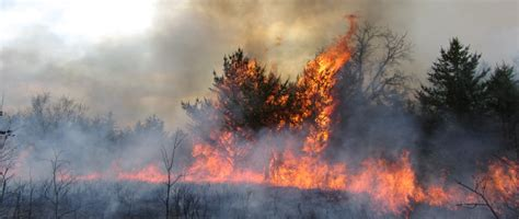 Wi Gov Simple Search Burning Permits Wisconsin Dnr