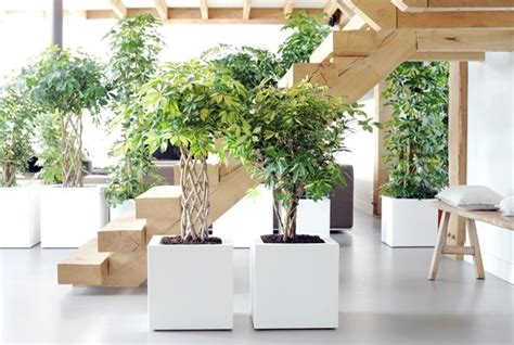 piante da interno purificano l piante purificano l idee green
