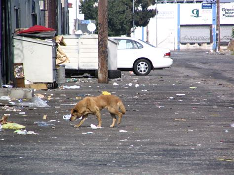 homeless puppies homeless la river 4 jpg 1600 215 1200 homelessness and animals