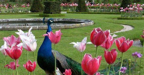 i love egypt beautiful gardens 1 i love egypt beautiful gardens 2