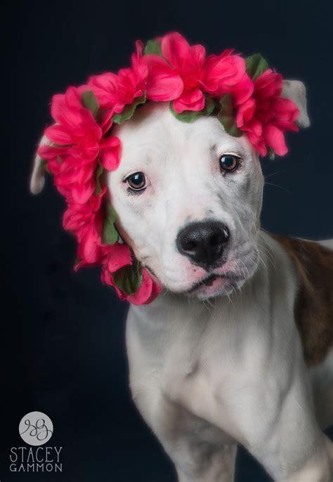 Imagenes Artisticas De Animales   el refugio que hace fotos artisticas a los perros el