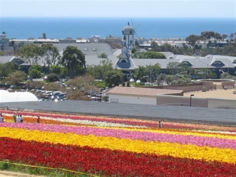Carlsbad Flower Fields Tourguidetim Reveals San Diego Flower Garden San Diego