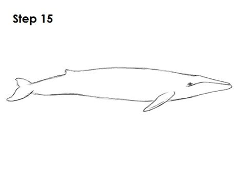 Blue Whale Drawing