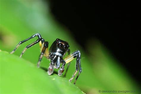 Drone Tarantula spider drone by oyia on deviantart