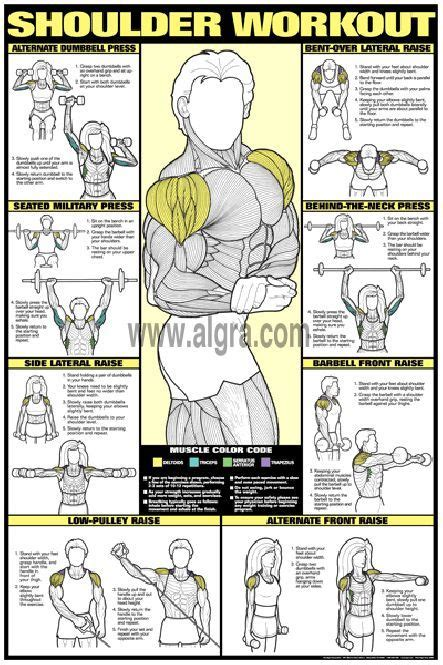 workout posters the shoulder and weight on