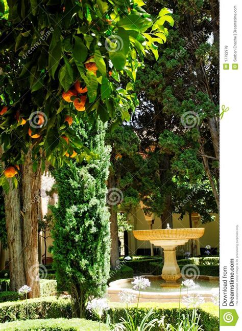 Patio Orange Tree by Orange Trees In Patio Royalty Free Stock Photos Image