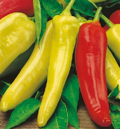 Biji Benih Cosmos Bright Lights Mix benih cabe wax hungarian pepper 4 biji non retail