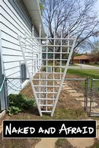 trellis for garden plants 5 climbing plants for vertical butterfly gardens