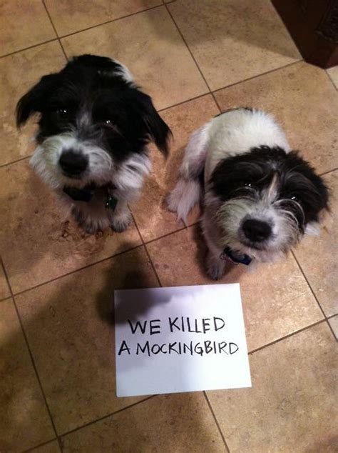 bad puppies 20 bad dogs being shamed with signs pleated