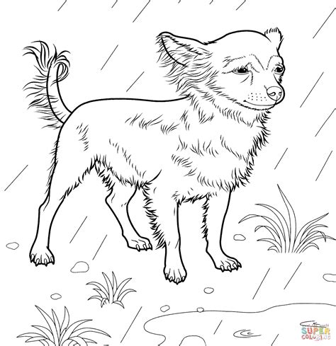 chiwawa puppies coloring pages chihuahua coloring page free printable coloring pages