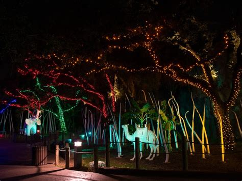 zoo of lights houston houston s best lights it s to beat this