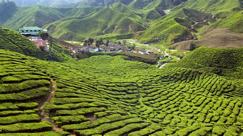 Find Malaysia Cameron Highlands Holidays Holidays To Cameron Highlands 2016 2017 Kuoni