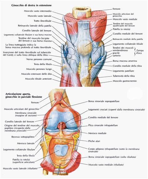 ginocchio dolore interno laterale articolazione ginocchio medicinapertutti it