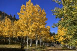 colorado fall colors 20 colorado hikes for spectacular fall color the