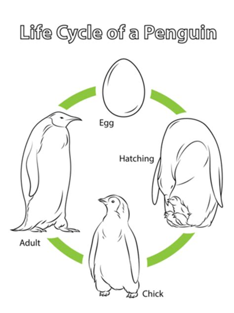 penguins family coloring page coloring pages sea birds in life cycle of a penguin coloring page free printable