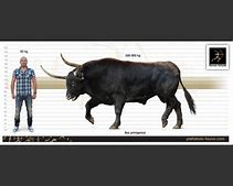 Image result for x stock
