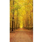 Yellow Autumn Forest Trees Android Wallpaper Free Download