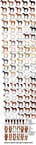equine color calculator colors patterns by ninquetolliel on deviantart