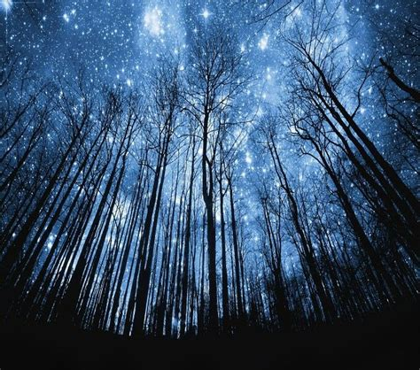 tree silhouette against starry night sky harmonia best 25 starry night sky ideas on pinterest night stars