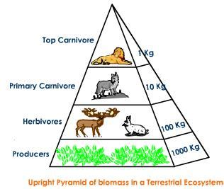 trophic level diagram ecological pyramid pyramid of numbers with diagram