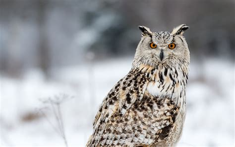 owl background owl hd wallpaper and background image 2048x1281